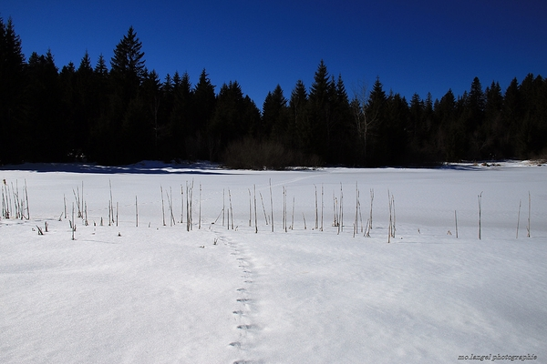 Les traces sur l'étang gelé