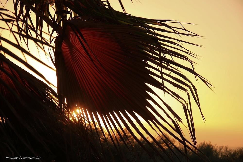Le vent dans les palmes