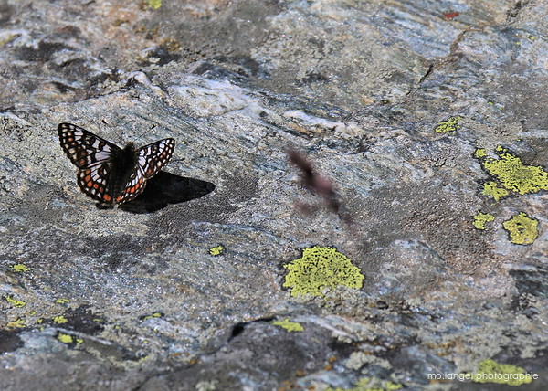 Le bain de soleil du papillon