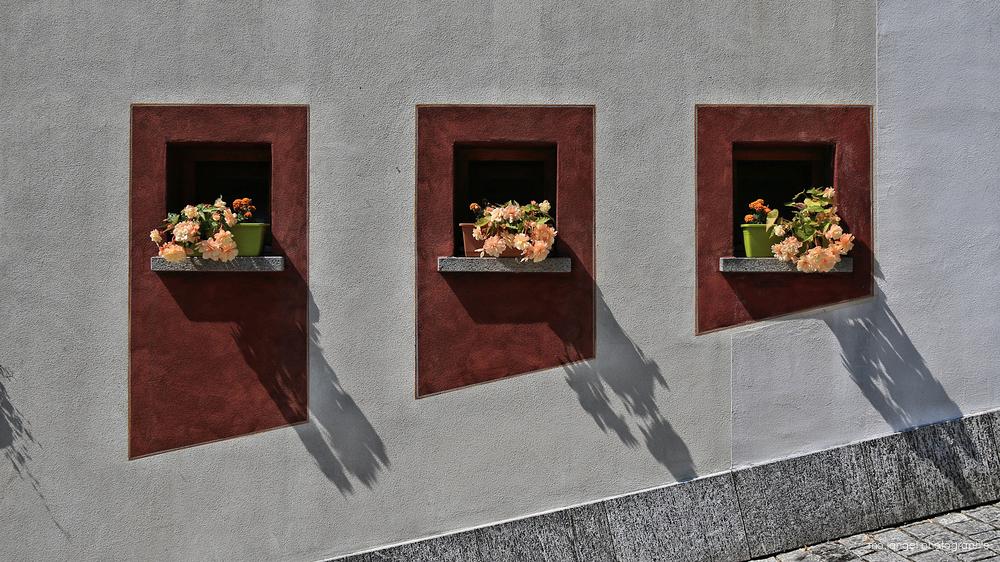 Les fenêtres fleuries