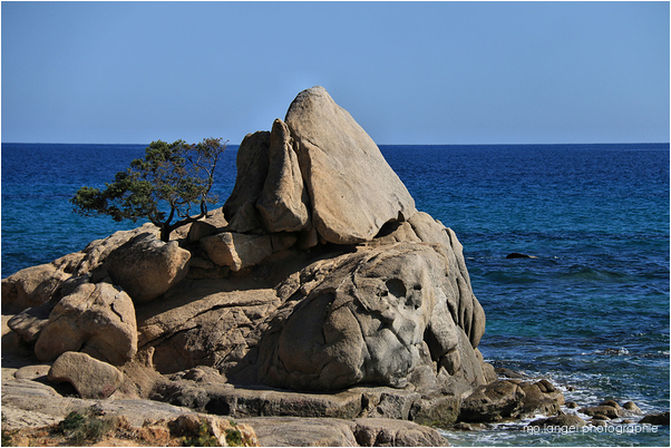L'arbre et le rocher