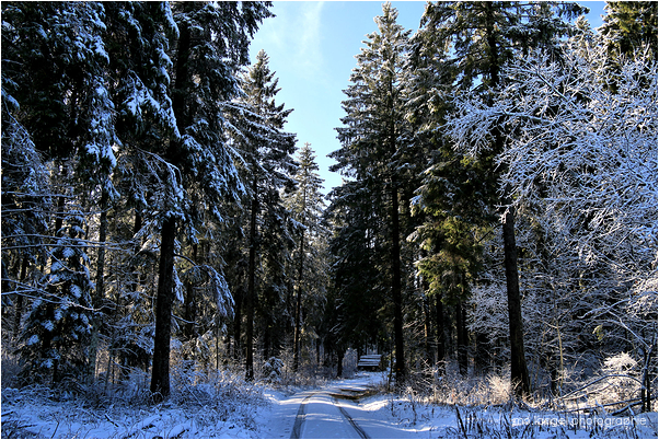 Le chemin forestier