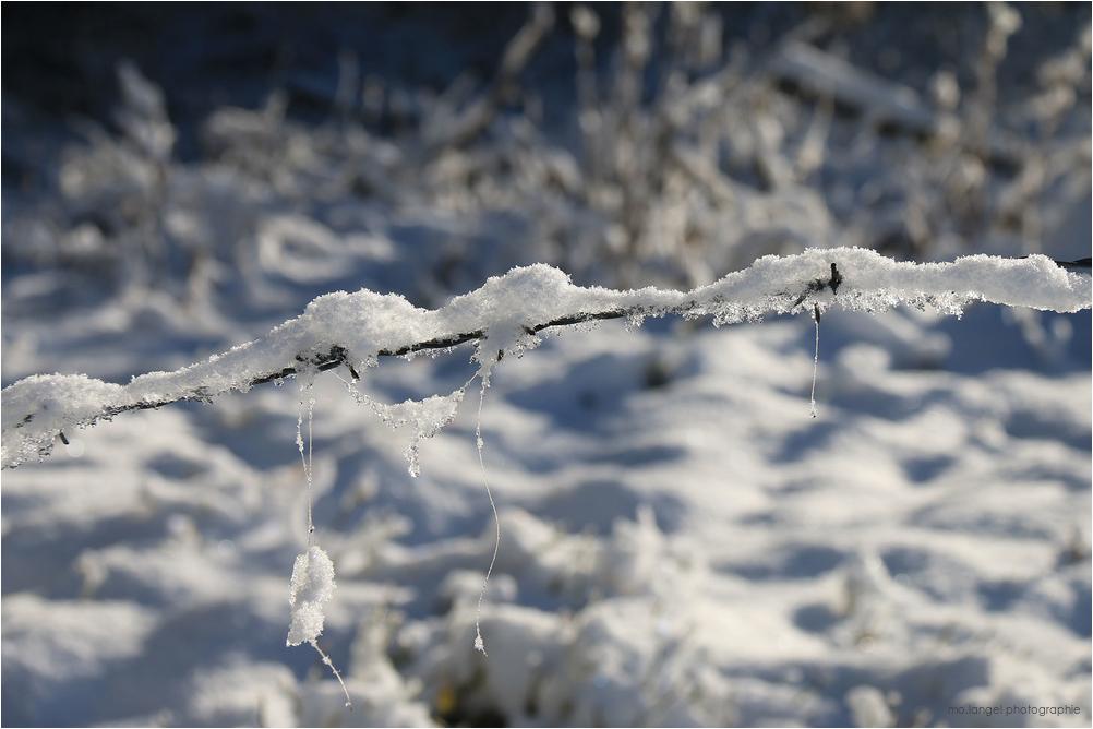 Glacé et piquant