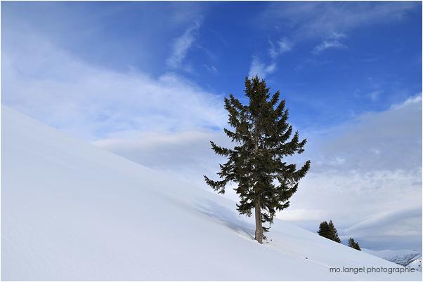 Le sapin dans la neige