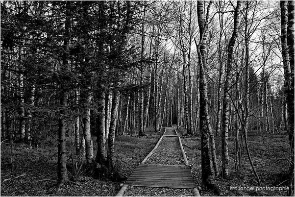 Le chemin de forêt