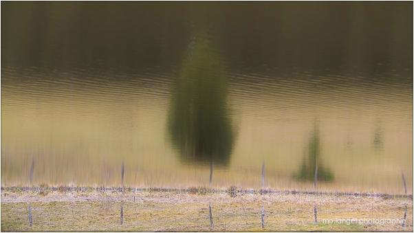 Sur les bords de l'étang