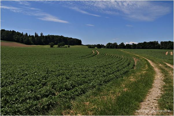 Le chemin à travers champs
