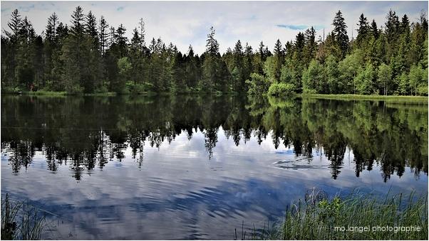 Le miroir de l'étang