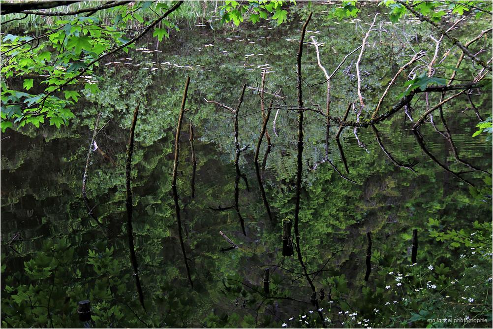 Les reflets du marais #2