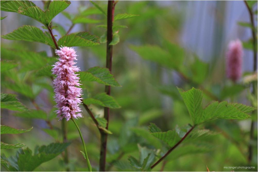 La fleur délicate