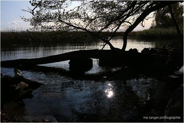 L'oeil du lac