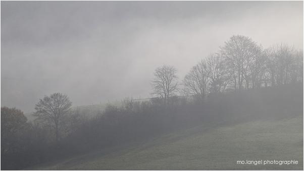 Brouillard en campagne