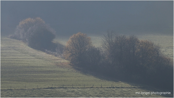Brouillard en campagne #2