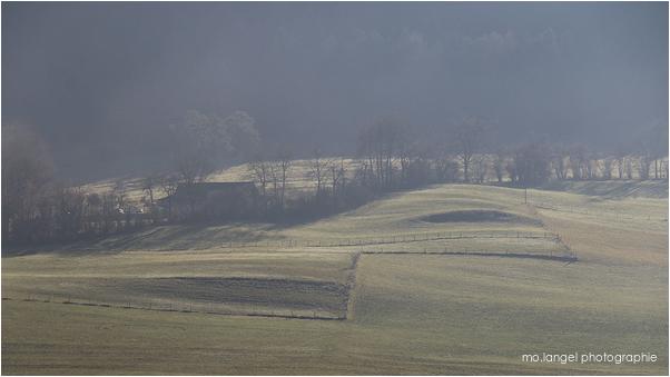 Brouillard en campagne #3