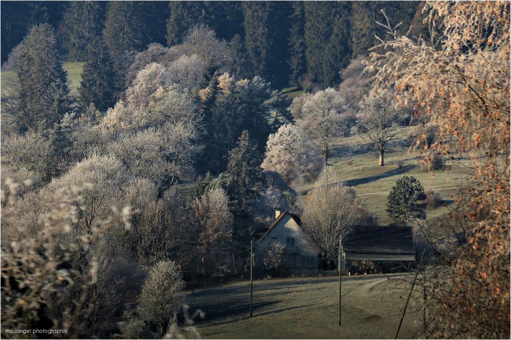 La maison sous les arbres