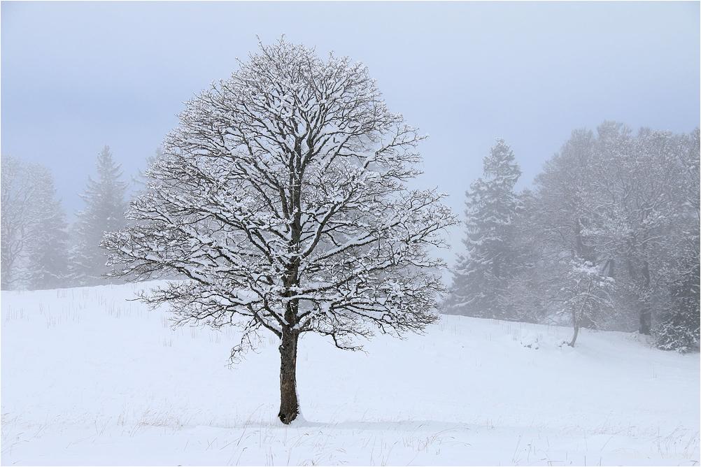 Le petit arbre sous la neige