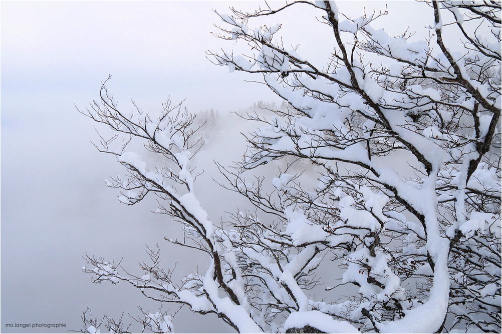 Les branches chargées de neige