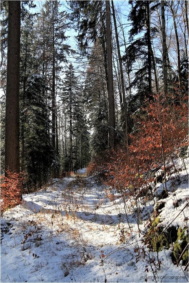 Balade dans la forêt