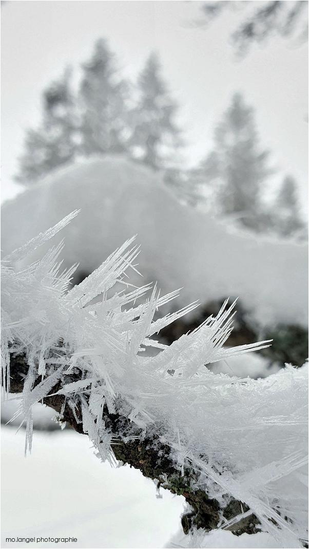 Les épines de glace