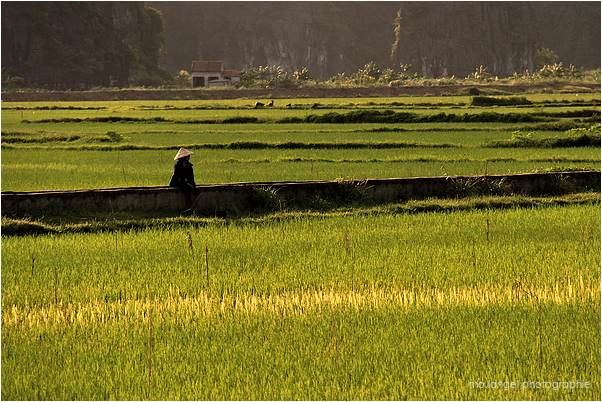 Un instant de repos dans la rizière