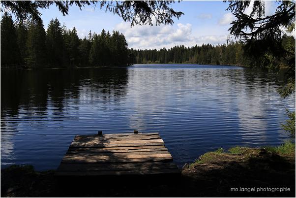 Le bel étang