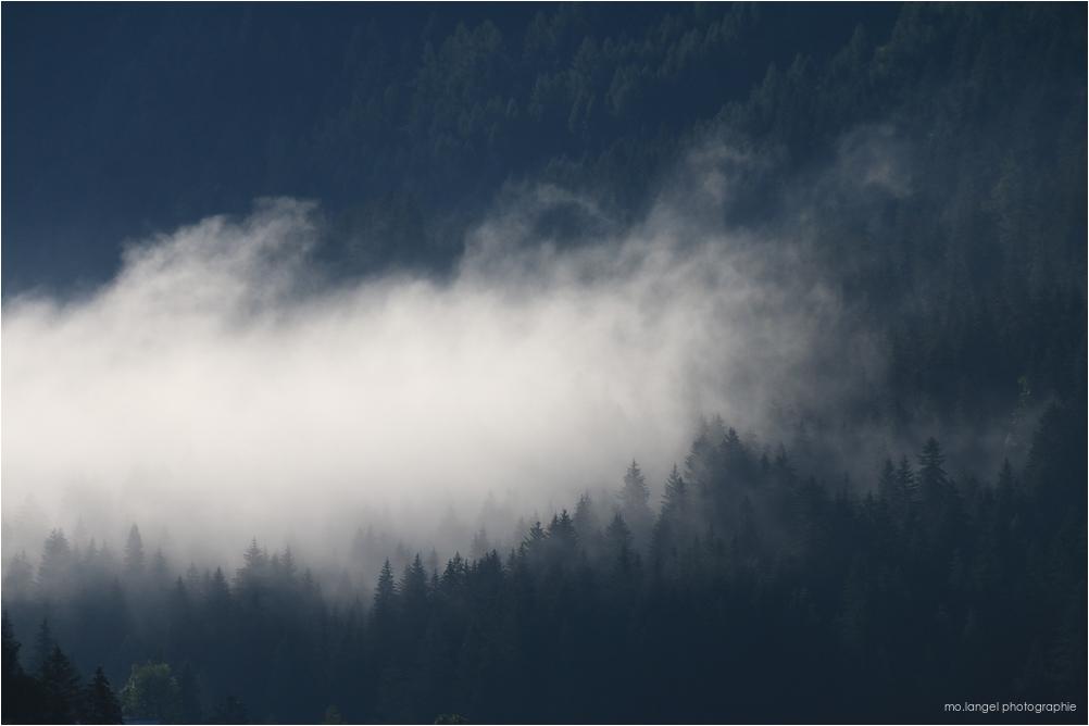 Les sapins dans la brume