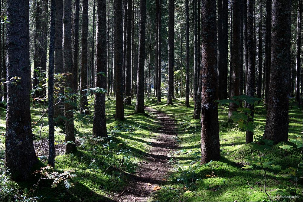 Le petit chemin de forêt