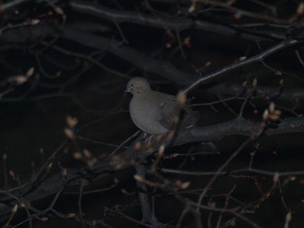 US Bird