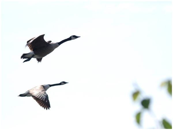 Twin take off
