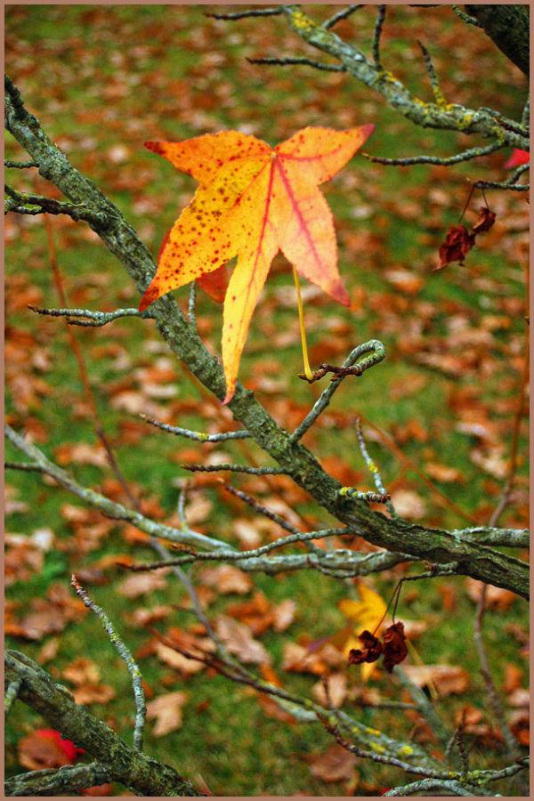 dernière feuille sur arbre