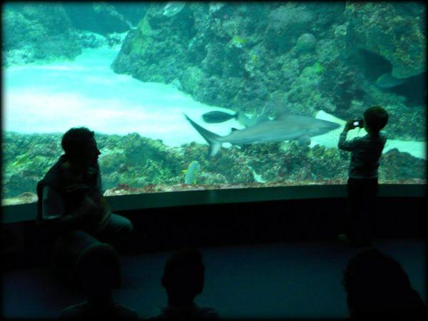 l'enfant et le requin