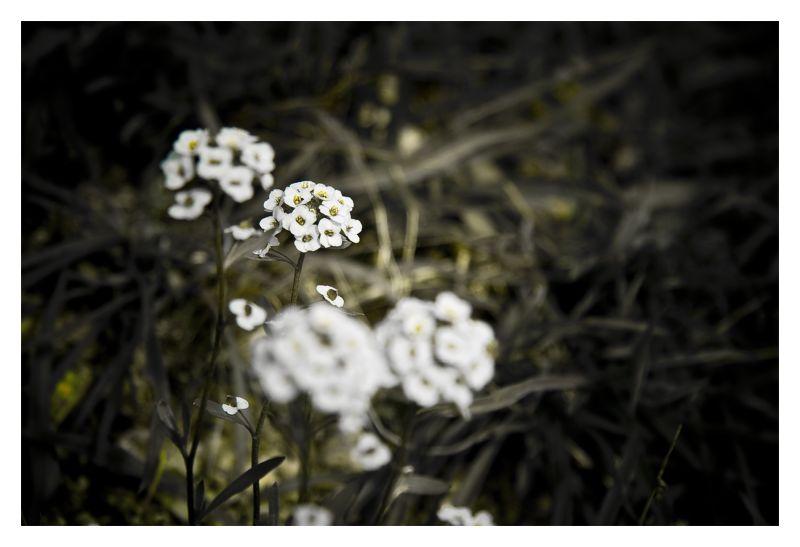 Desenfocament selectiu de la flor