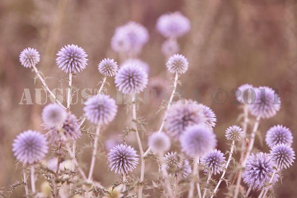 Card en flor