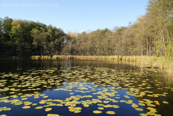 Przylesie lake