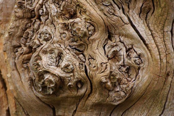 Gnarled Wood.