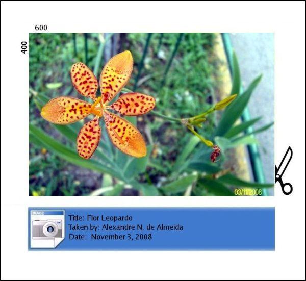 flor com pintas de leopardo