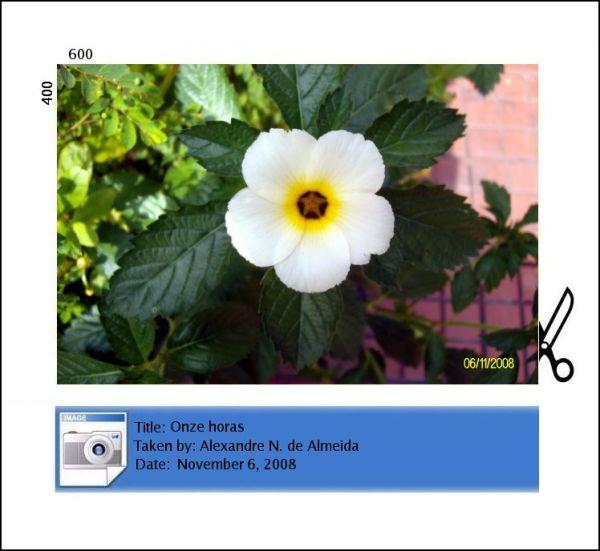 onze horas flower flor