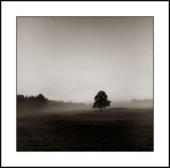 Misty Landscape Kildare