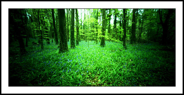 Killinthomas wood World Pinhole Day 2011
