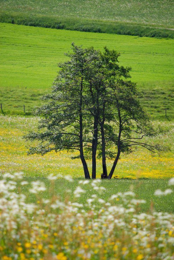 La campagne suisse au printemps