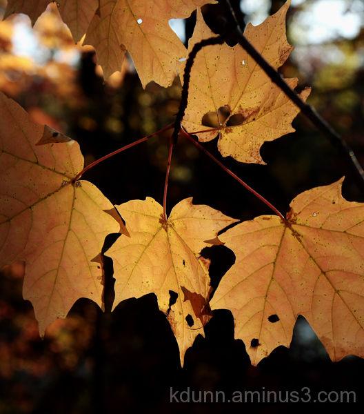 Fall at Cincinnati Nature Center, Rowe Woods.