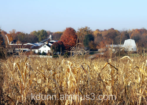 Adams County Ohio cornfield