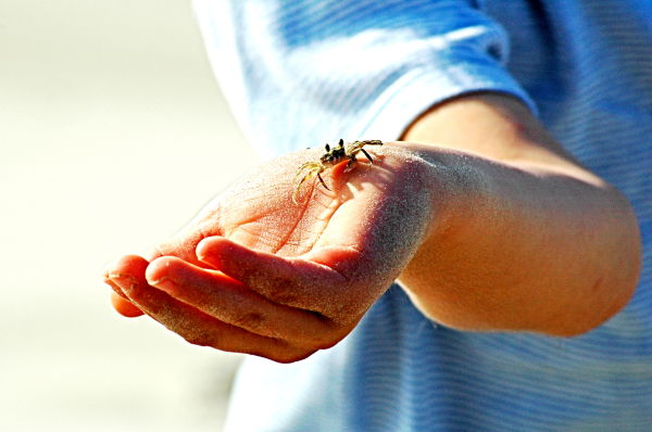a little crab on his hand