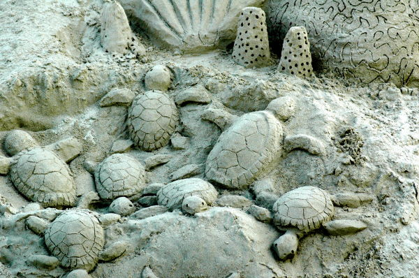turtles by sand