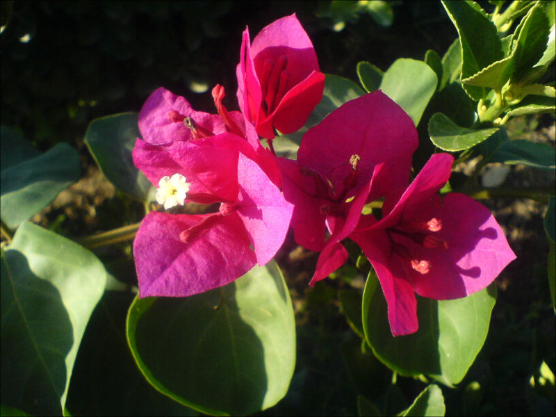 Flower, North Iran, گل