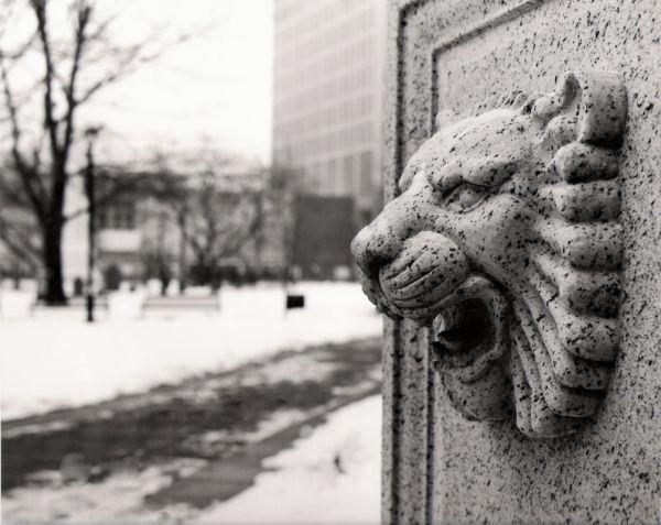 bartholomew lion