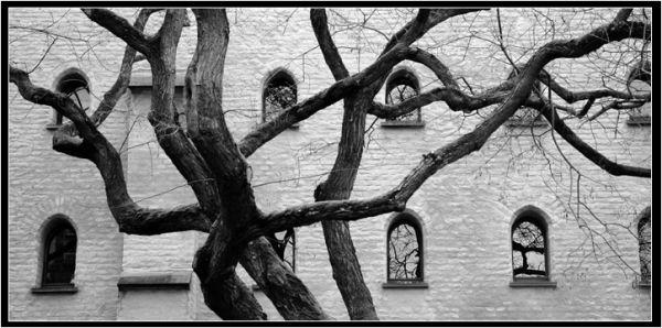 l'arbre à fenêtres