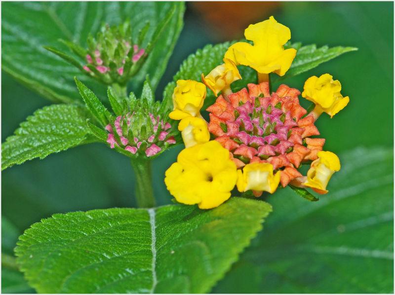 smelly flower