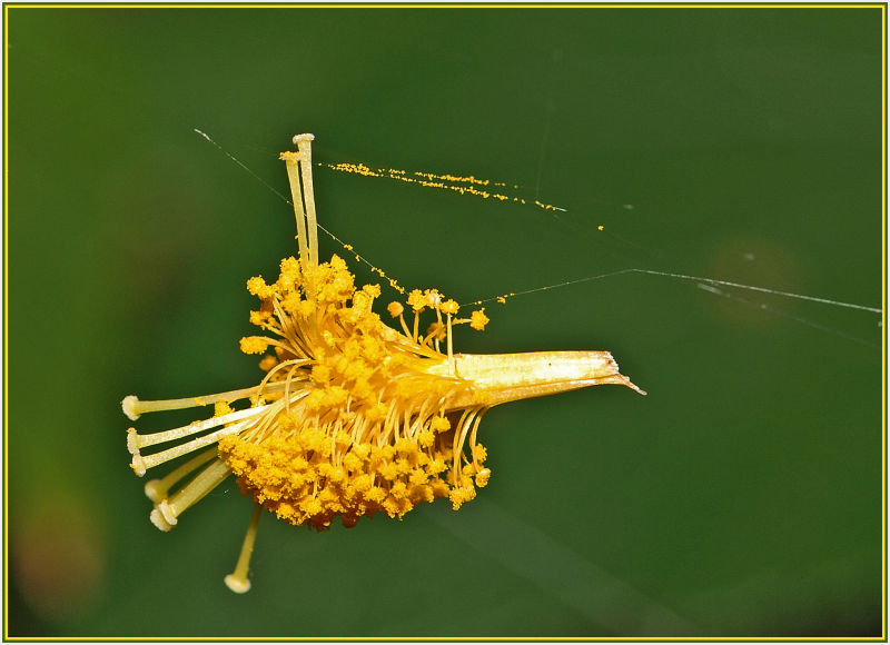 stamen and Pistil in the air
