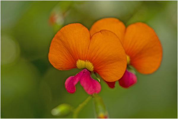 small wild flower